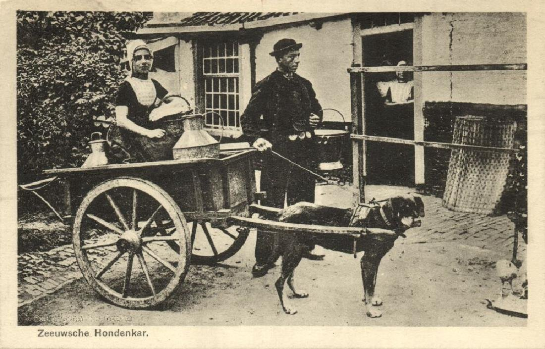 Lot of 8 Postcards of Dog Cart, Working Dogs - 7