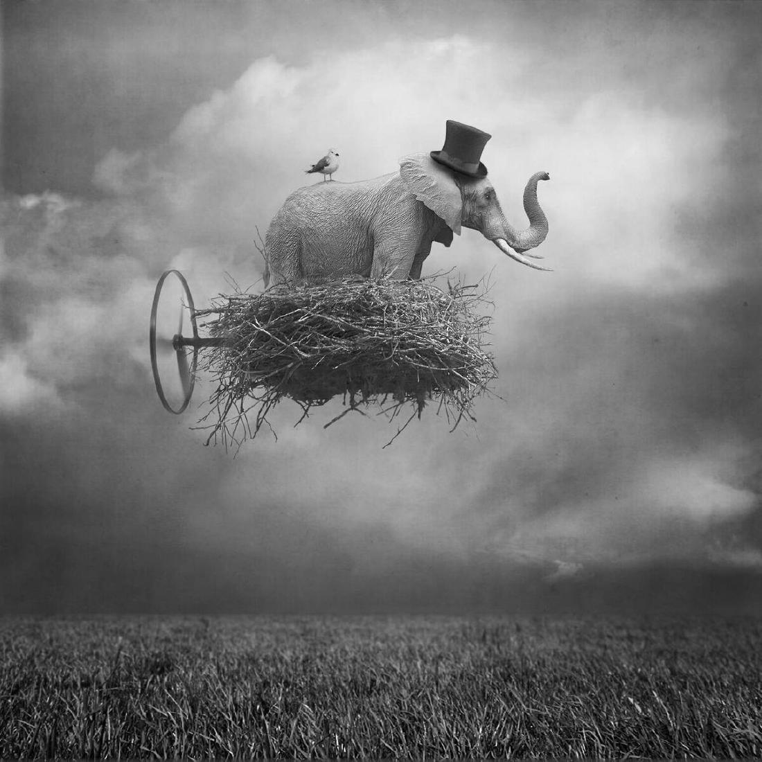 Beata Bieniak Chromogenic Print Flying Circus