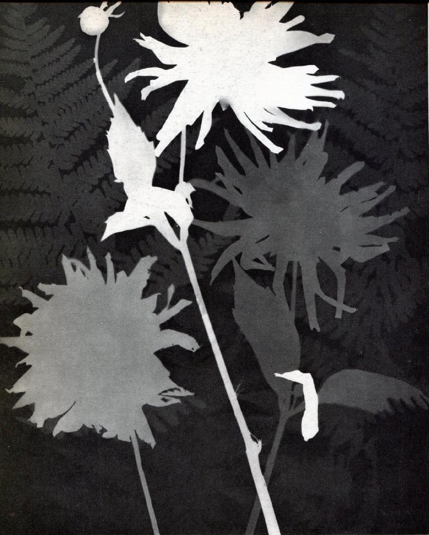 MAN RAY -  Rayograph, Flowers
