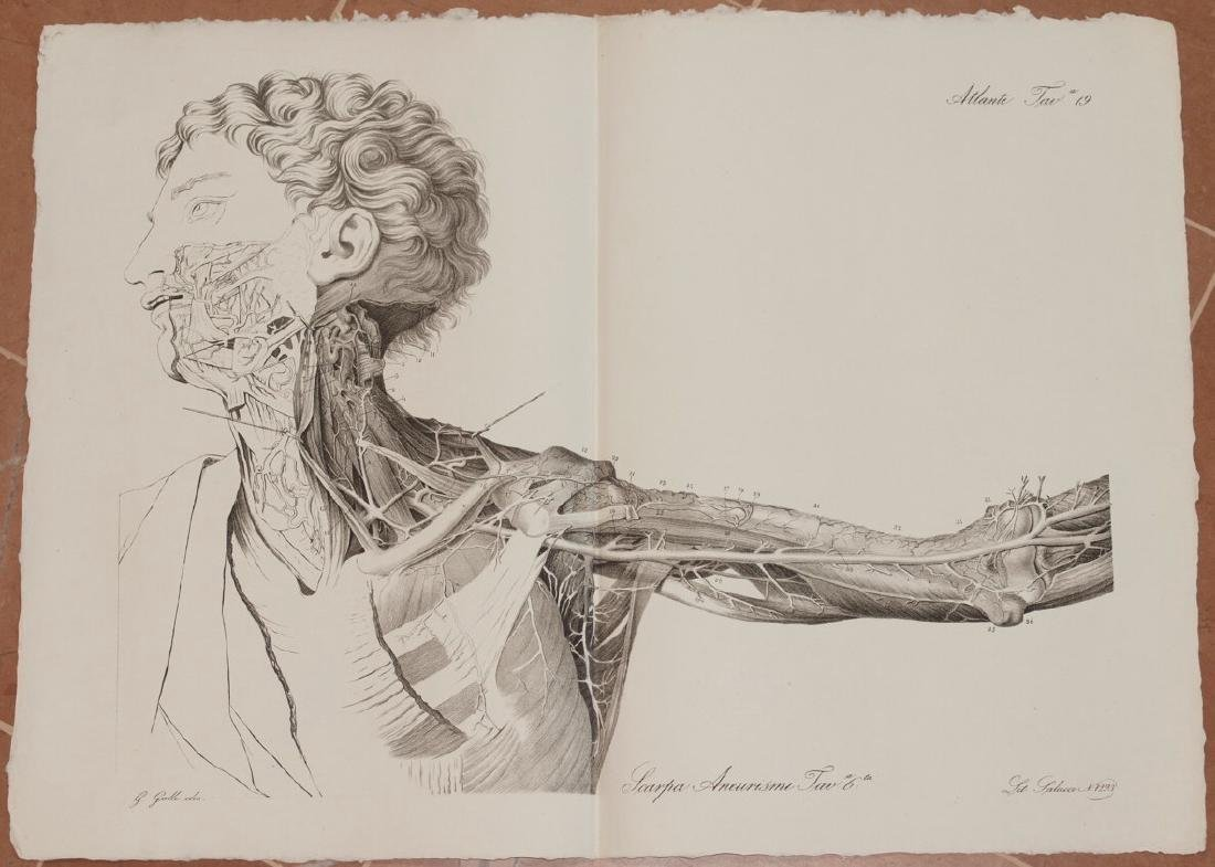 Antonio Scarpa Medicine Lithograph Anatomy 1839