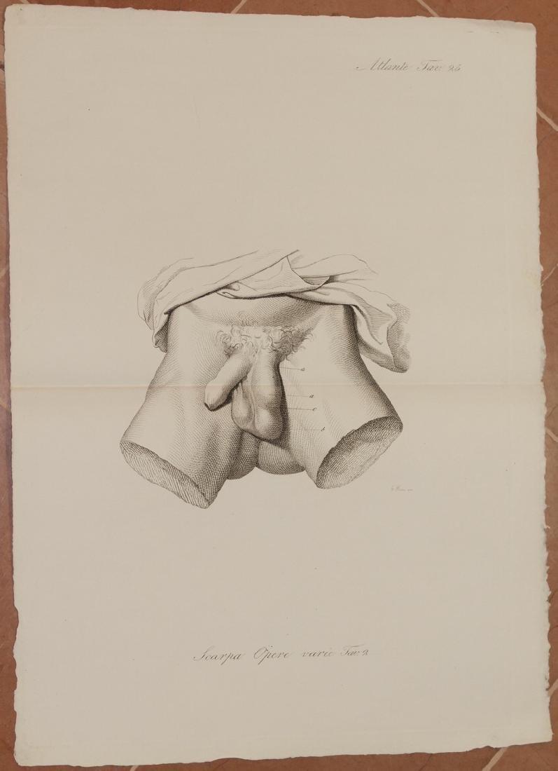 Antonio Scarpa Medicine Lithograph Anatomy Male