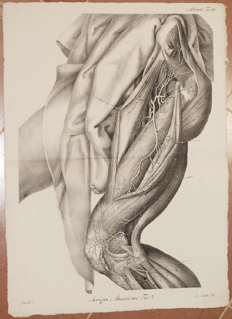 Antonio Scarpa Medicine Lithograph Leg Muscles 1839