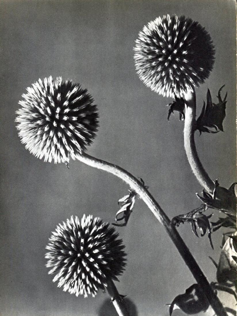 MAN RAY -  Flowers