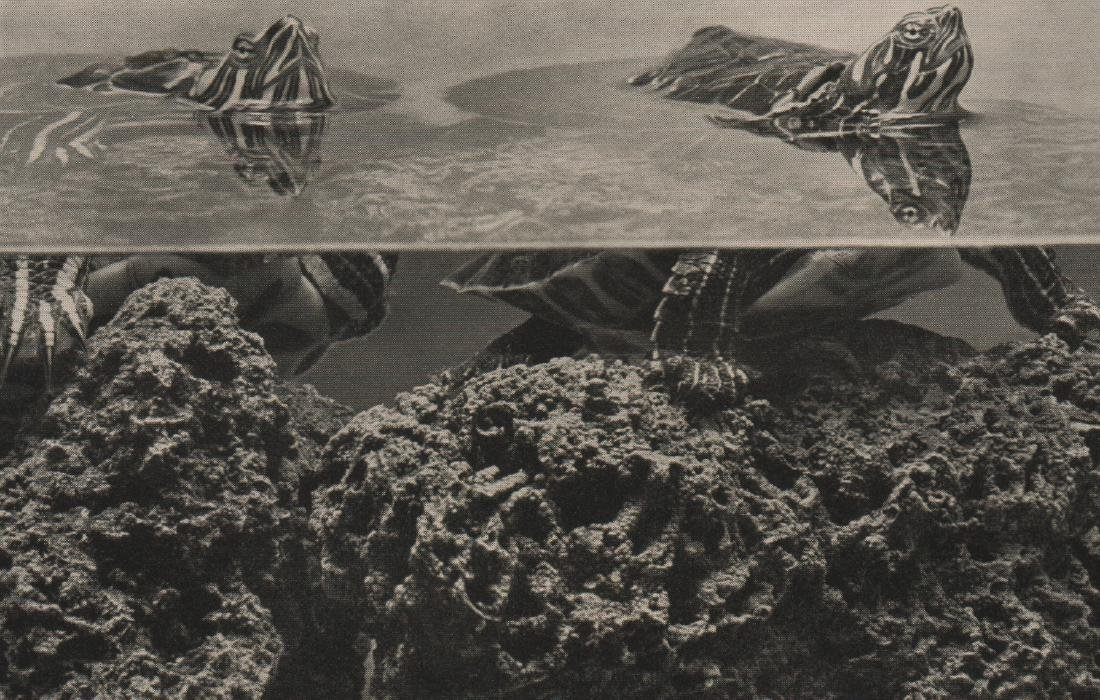 WERNER PETERS - Turtles