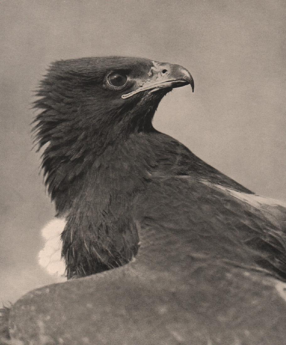 HORST SIEWERT - Hawk