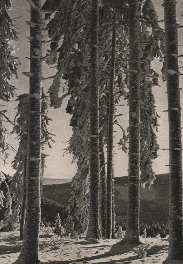 BRUDER WAGNER - Forest