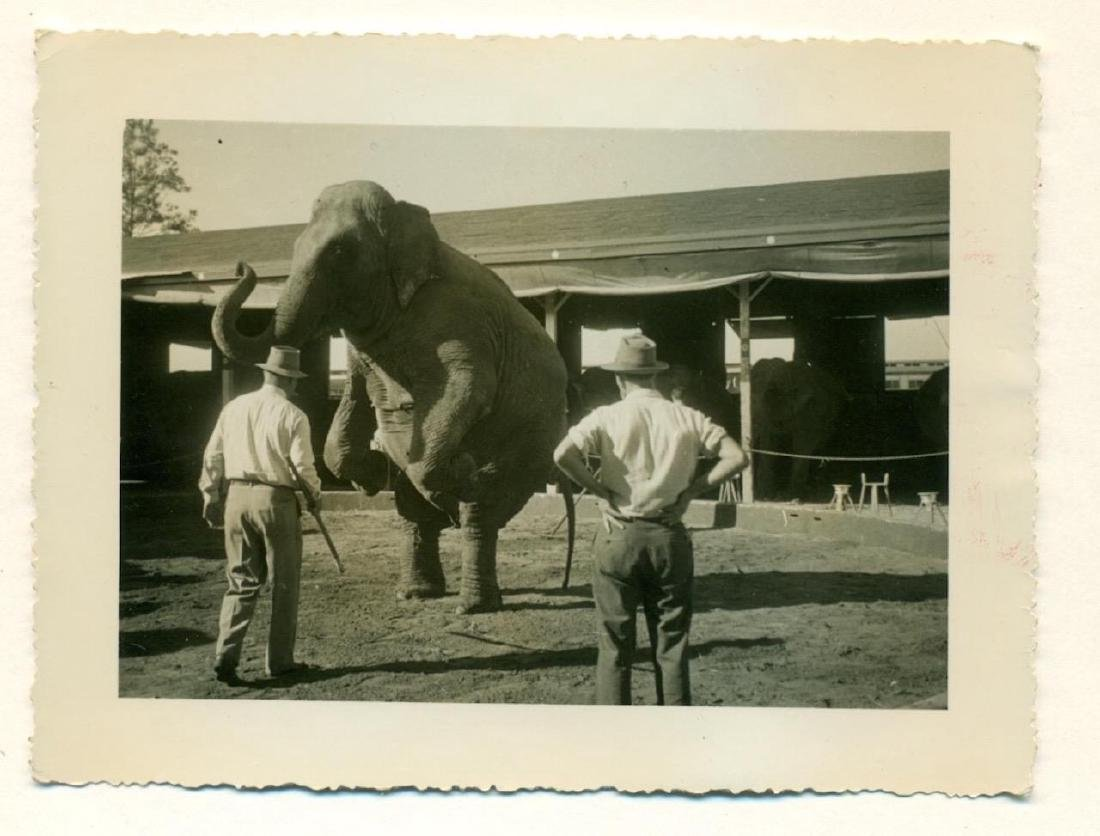 1930s Circus Routine Snapshot Animal Trainer Elephant - 2