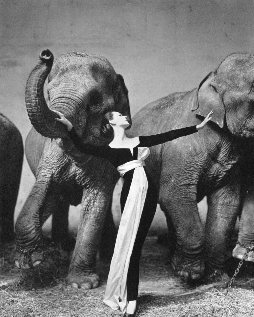 RICHARD AVEDON - Dovima with Elephants