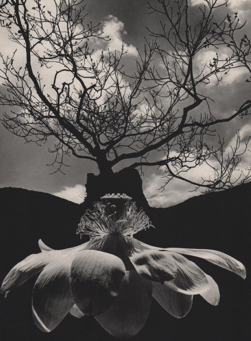 JERRY UELSMANN - Orchid Tree