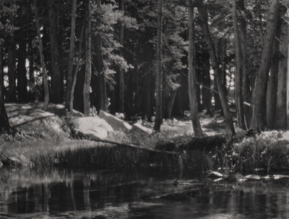 ANSEL ADAMS - Grove, Merced River