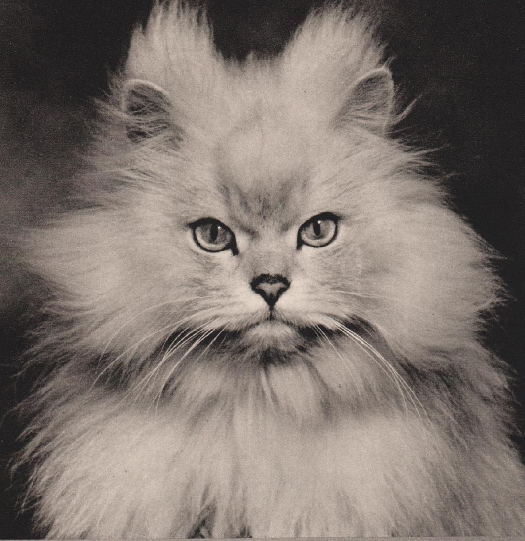 R. G. FENNAH - Glamour Puss