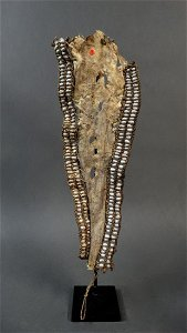 Old Fore head decoration Central Asmat