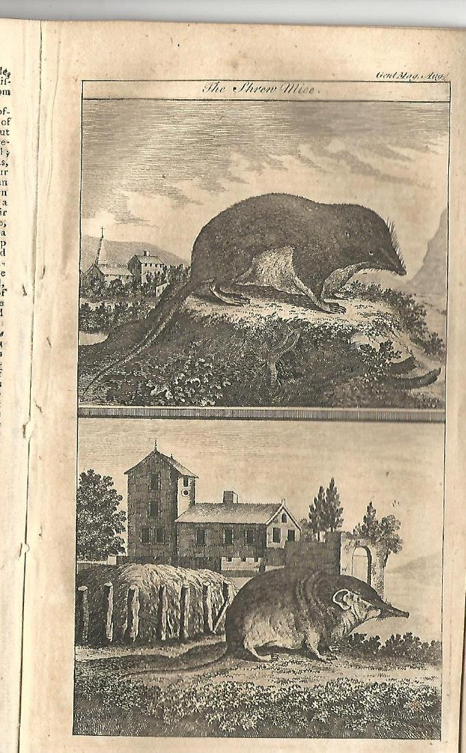 1764 Gentleman's Magazine Engravings Shrew Mouse