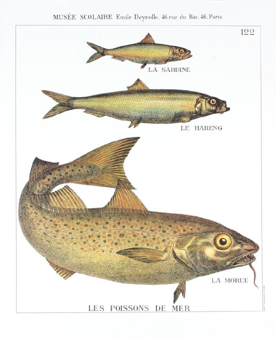 Emile Deyrolle Lithograph Les Poissons de Mer