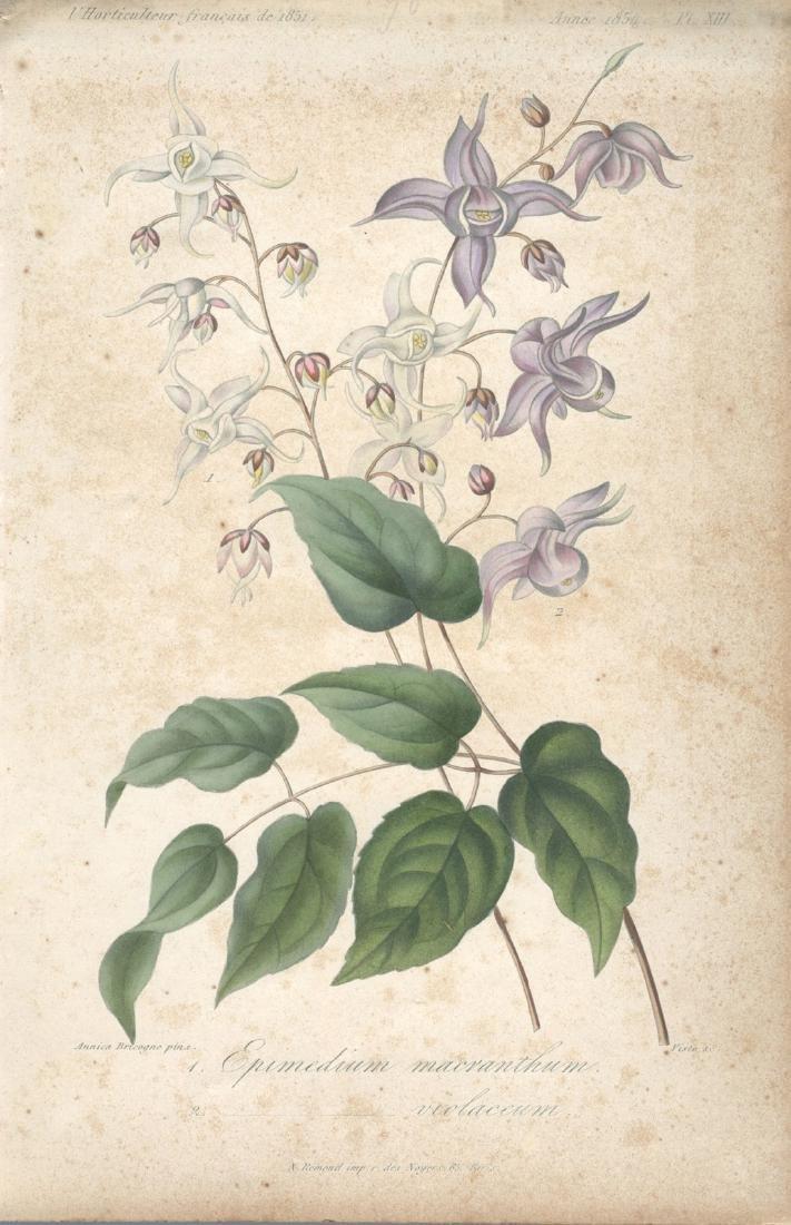 Francois Herincq Lithograph Epimedium macranthum