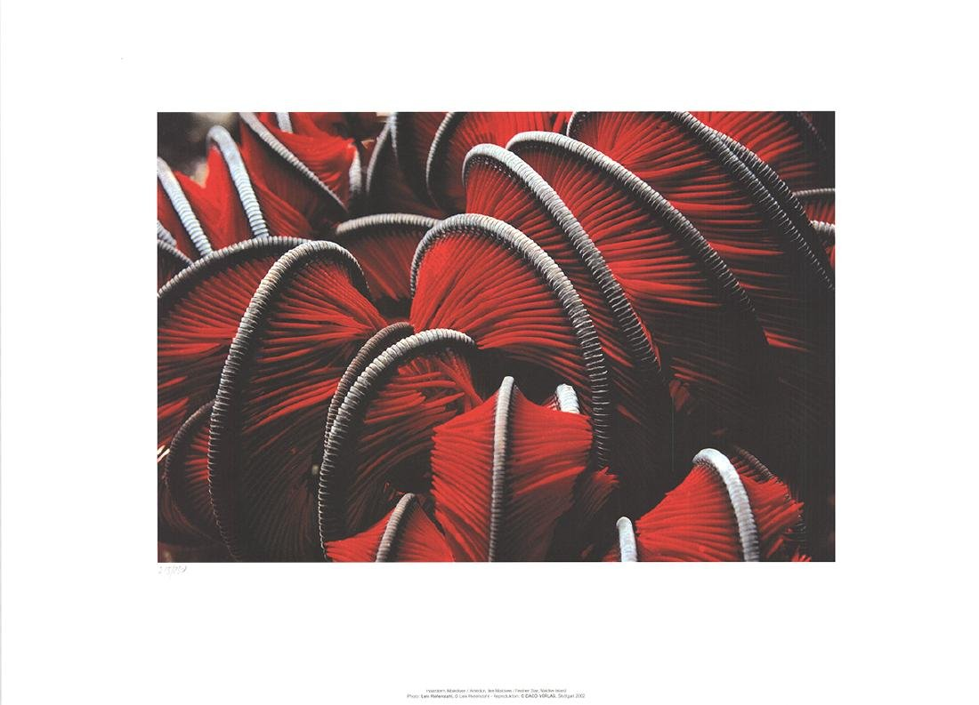 Leni Riefenstahl Offset Lithograph Feather Star Maldive