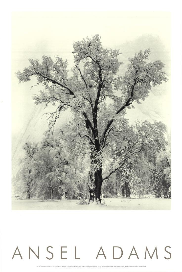 Ansel Adams Offset Lithograph Oak Tree, Snowstorm