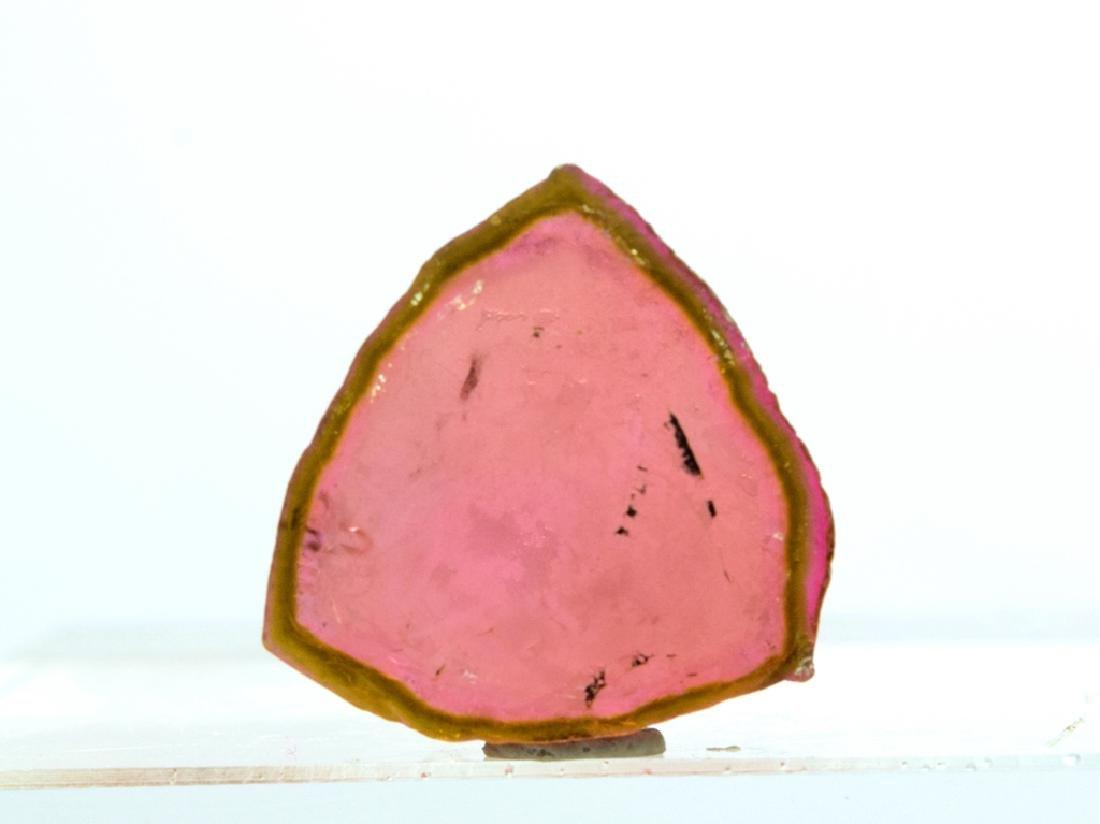 28.80 Carat Undamaged Watermelon Tourmaline Slice - 3