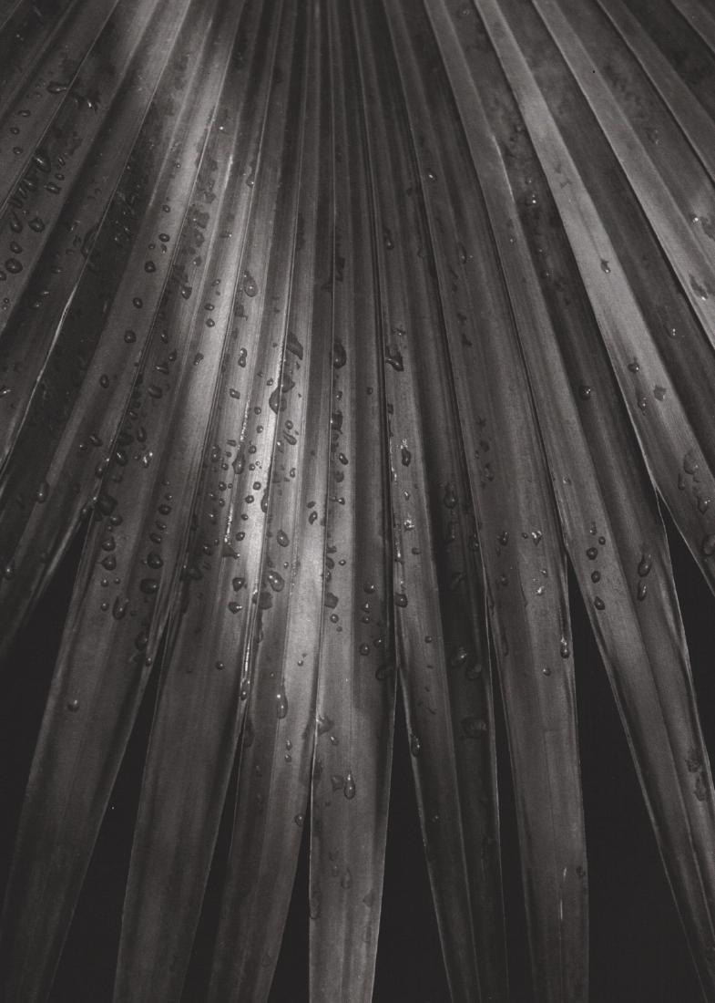 HORST - Pritchardia Gaudichaudi 1945