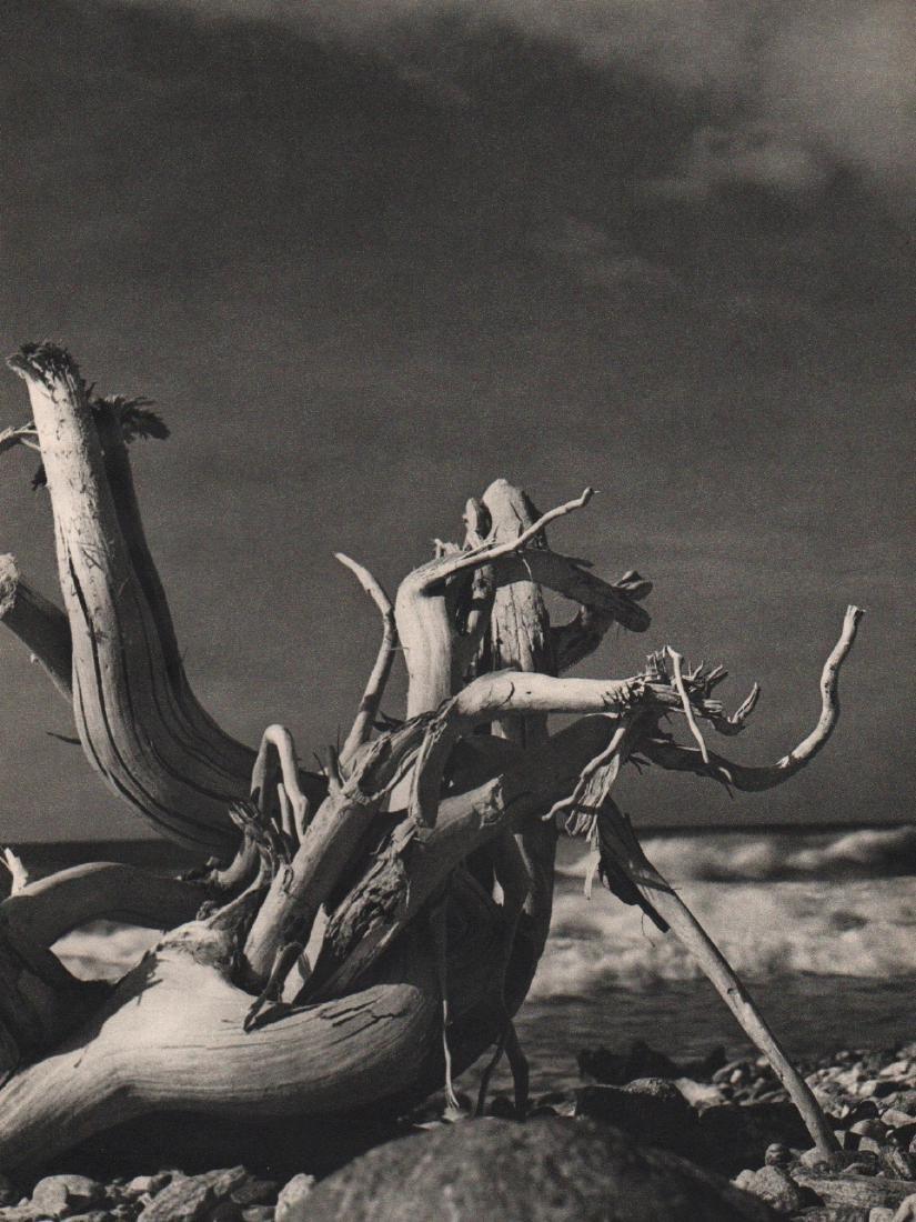 FINA GOMEZ REVENGA - Driftwood