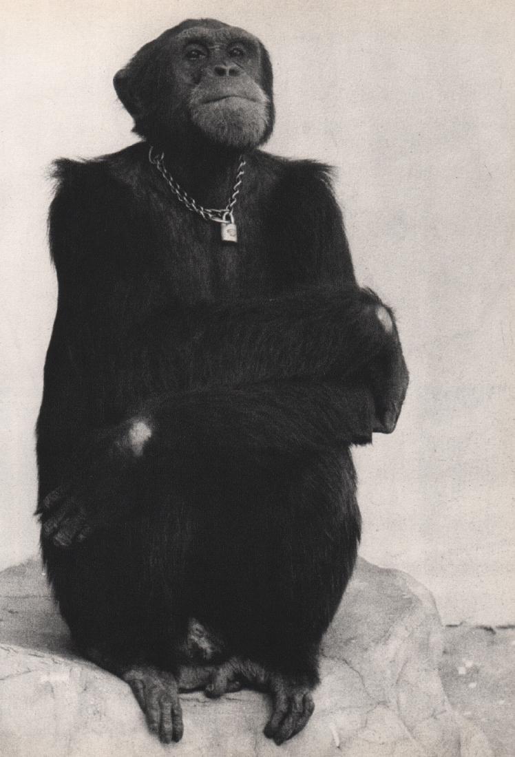 MASAYOSHI YOSHIE - Portrait