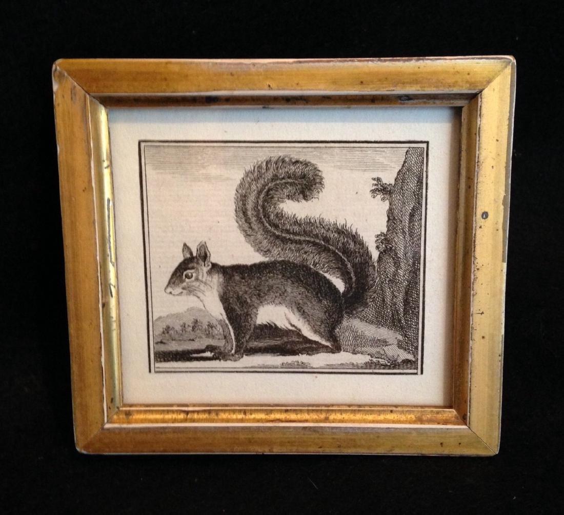 C1800 Squirrel Engraving