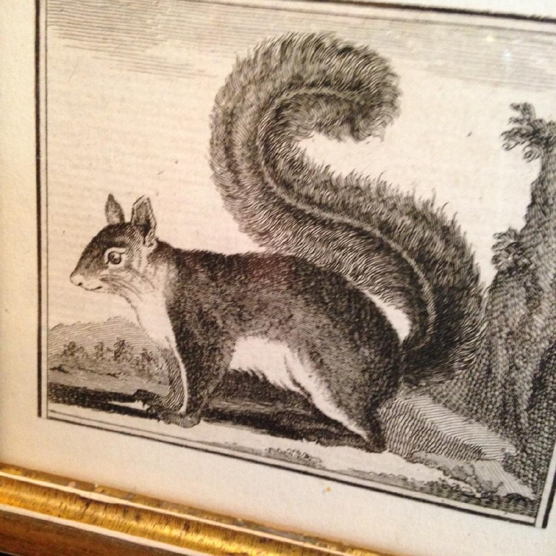 C1800 Squirrel Engraving - 2