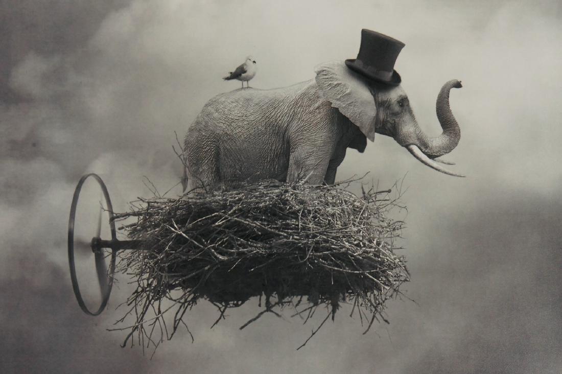 Beata Bieniak Flying Circus Print - 7
