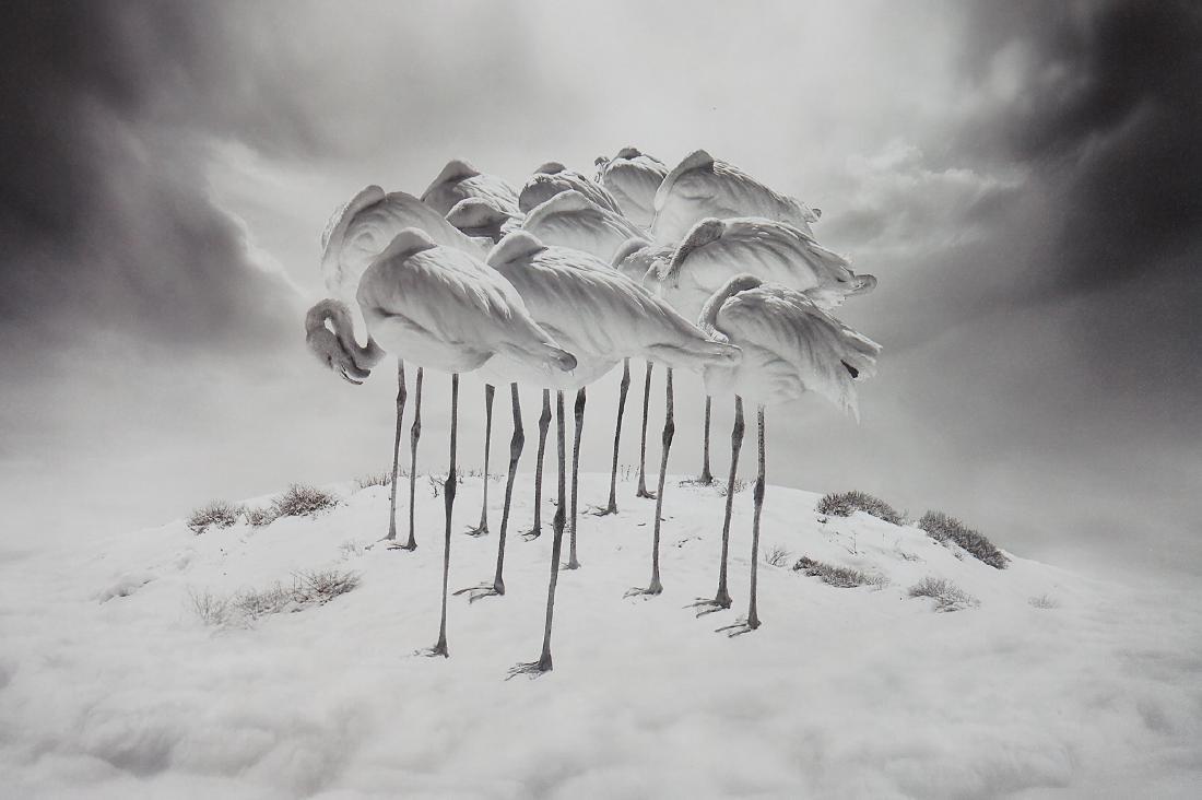 Sherry Akrami Sweet Dreams Print - 6