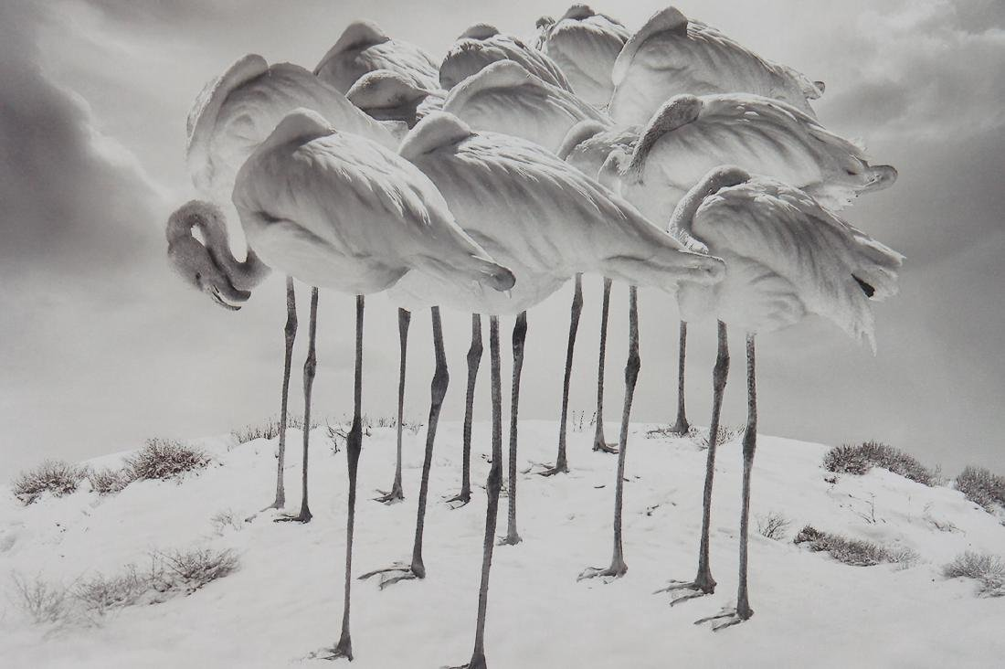 Sherry Akrami Sweet Dreams Print - 7