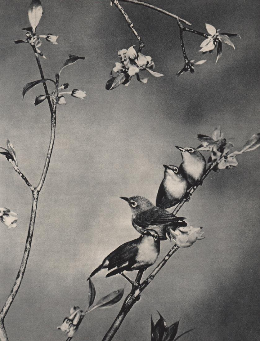 SHAU U. CHAN - Flock Together