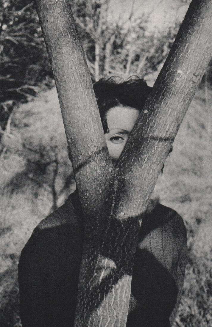 ALLAN WASSERMAN - Face and Tree