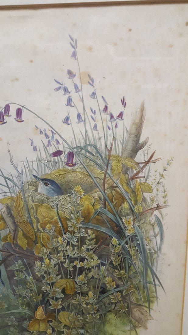 John Gould Lithograph Luscinia Philomela Nightingale - 8