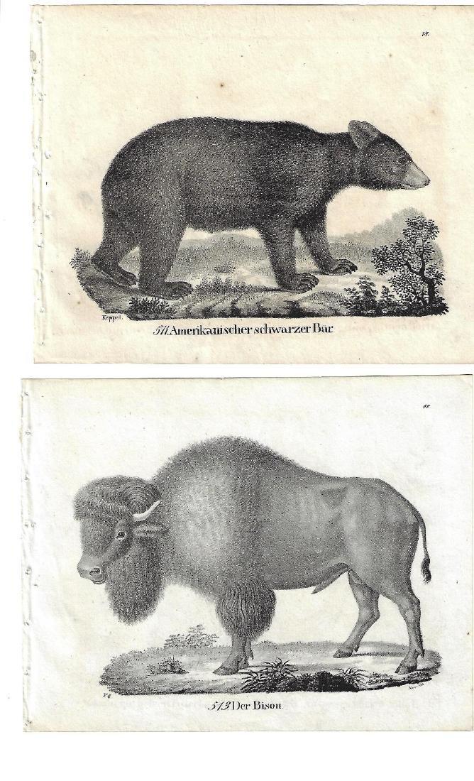 1850 TWO Engravings of American Buffalo and Black Bear