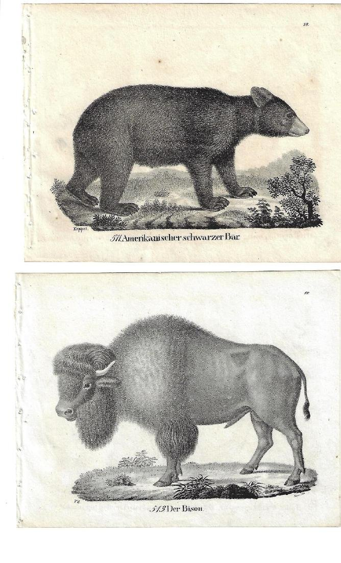 1850 TWO Engravings of American Buffalo and Black Bear