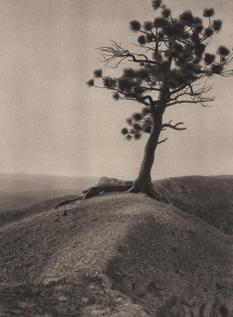 E.O. HOPPE - The Lonely Pine, Nevada
