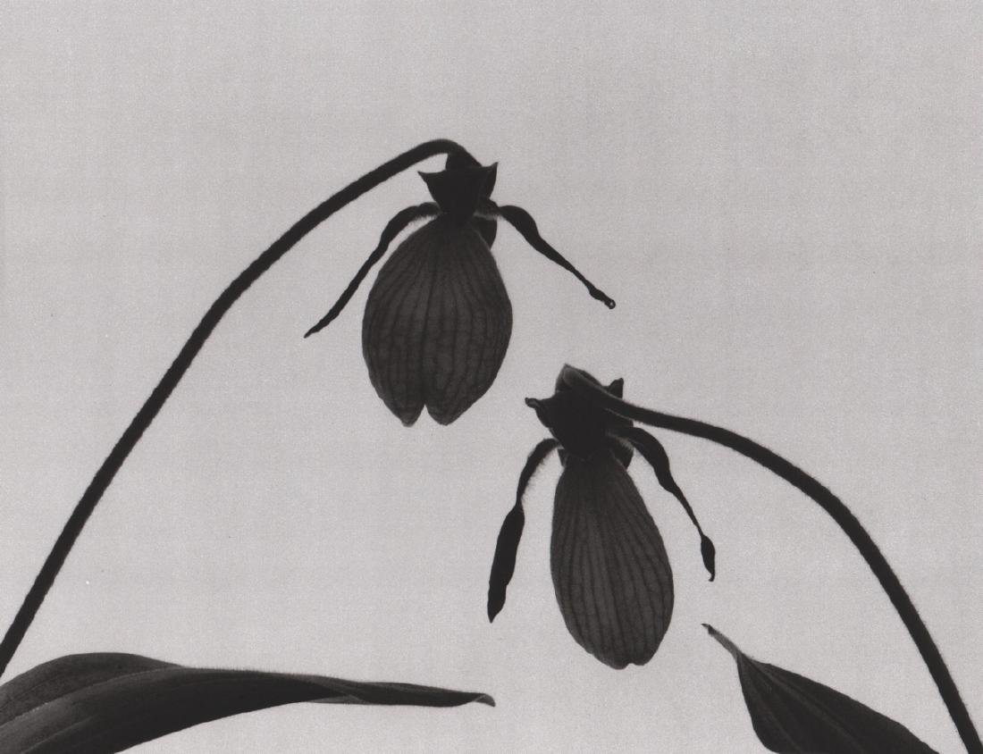 HORST - Lady Slippers, 1990