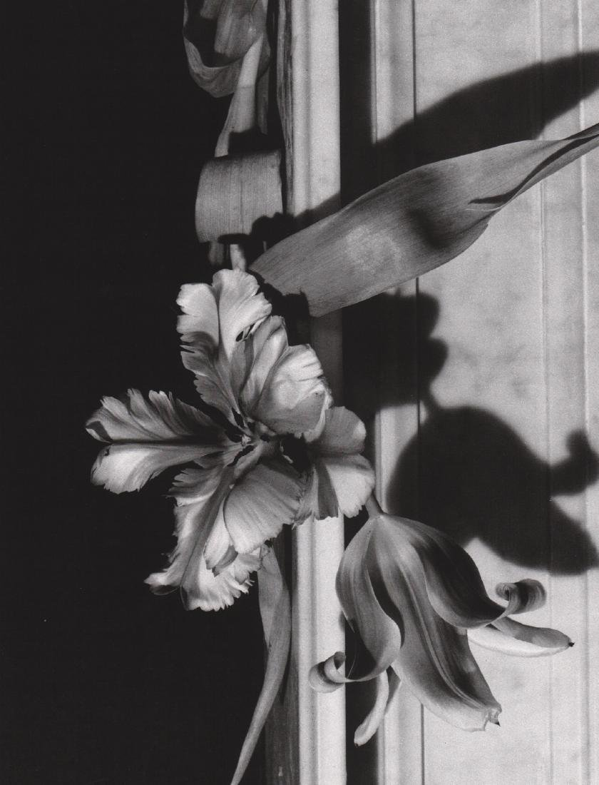 HORST - Tulips, Oyster Bay, 1989
