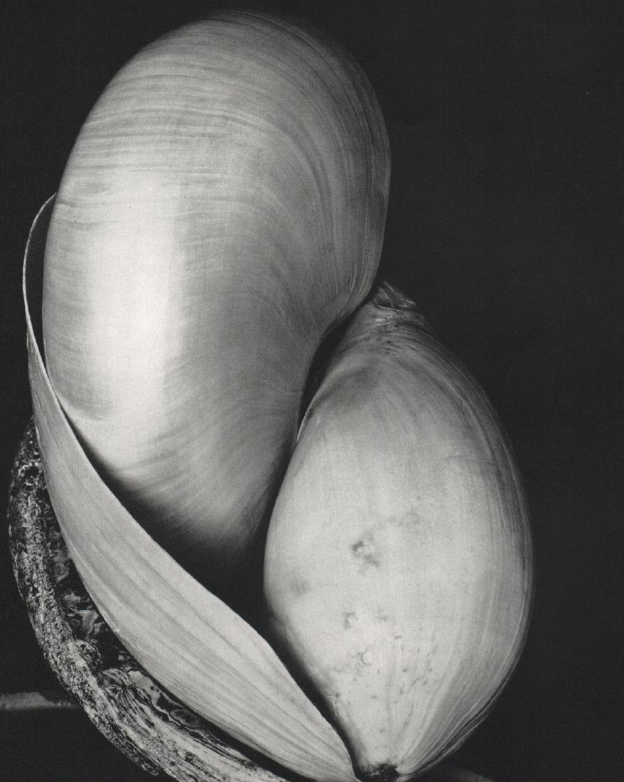 EDWARD WESTON - Shells, 1927