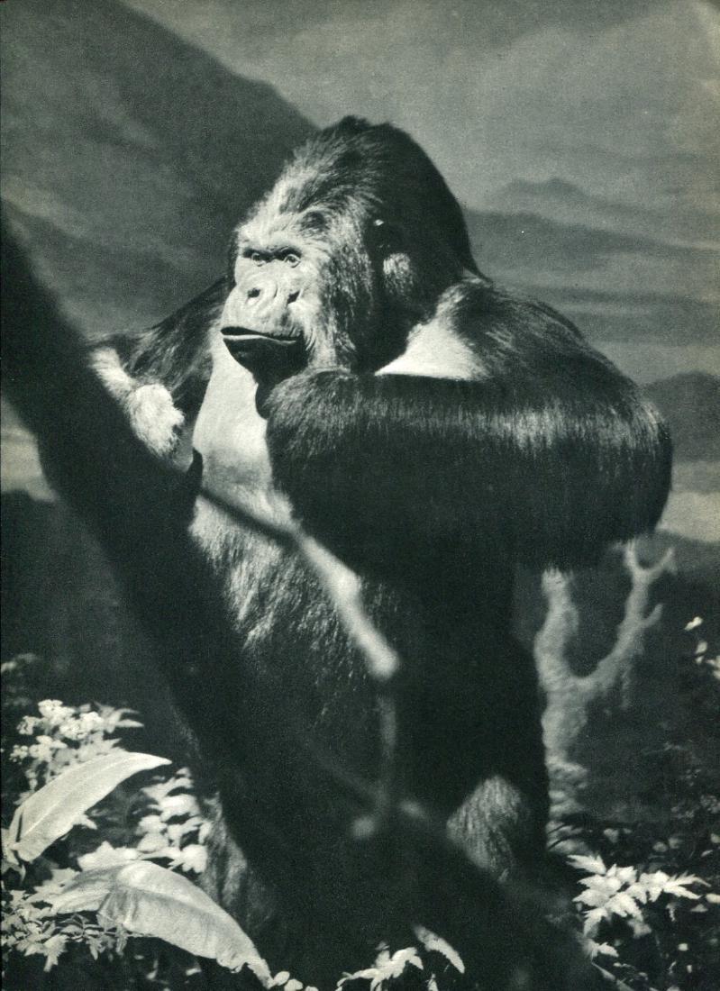 DICK WURTZ - Gorilla