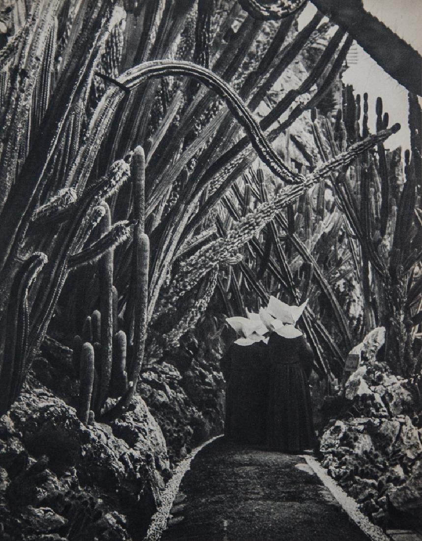 BRASSAI - Cactus Garden