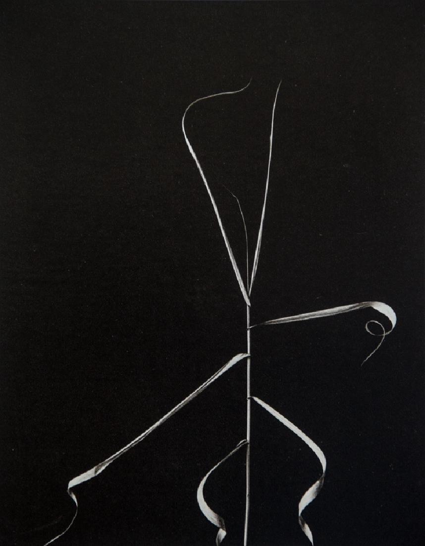 HARRY CALLAHAN - Aix en Provence, 1958