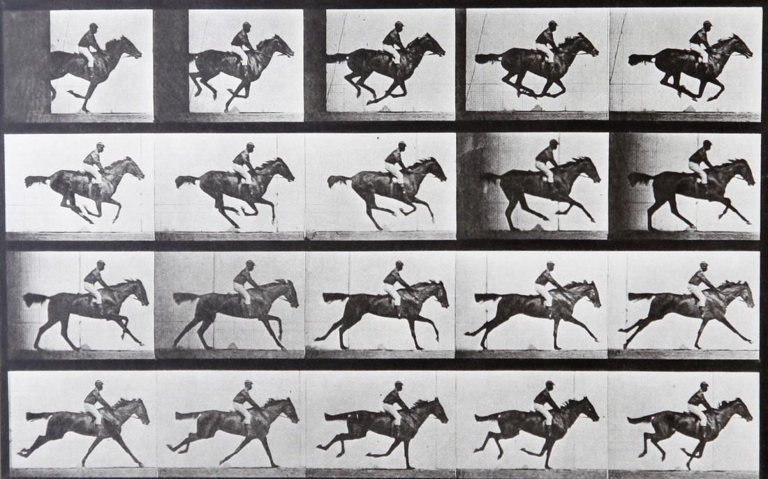EADWEARD MUYBRIDGE - Horse at galop AL667