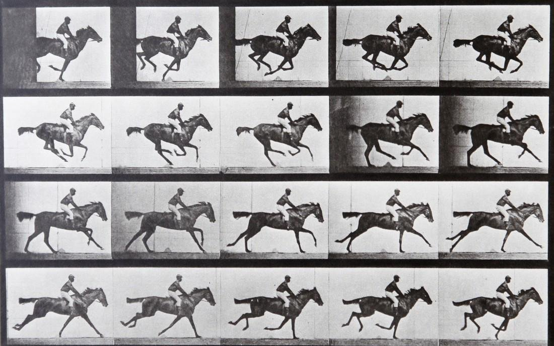 EADWEARD MUYBRIDGE - Horse at galop AL667