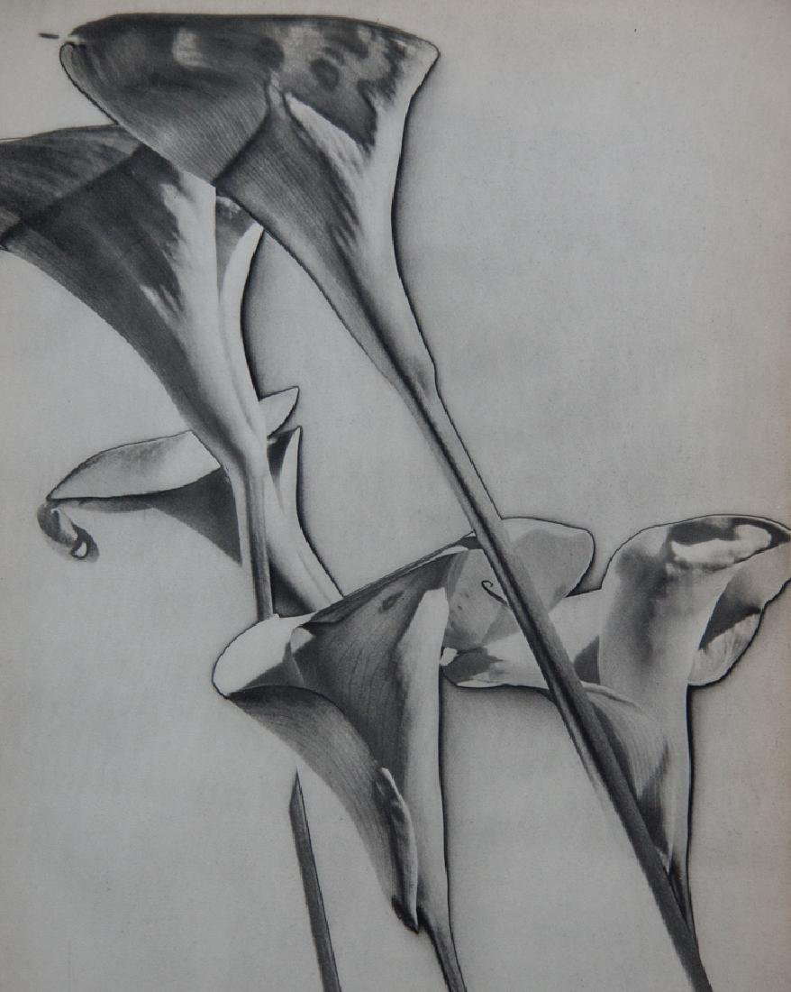 MAN RAY - Calla Lillies, Solarized, 1932
