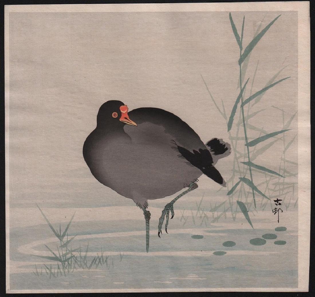 Ohara Koson Woodblock Gallinule bird