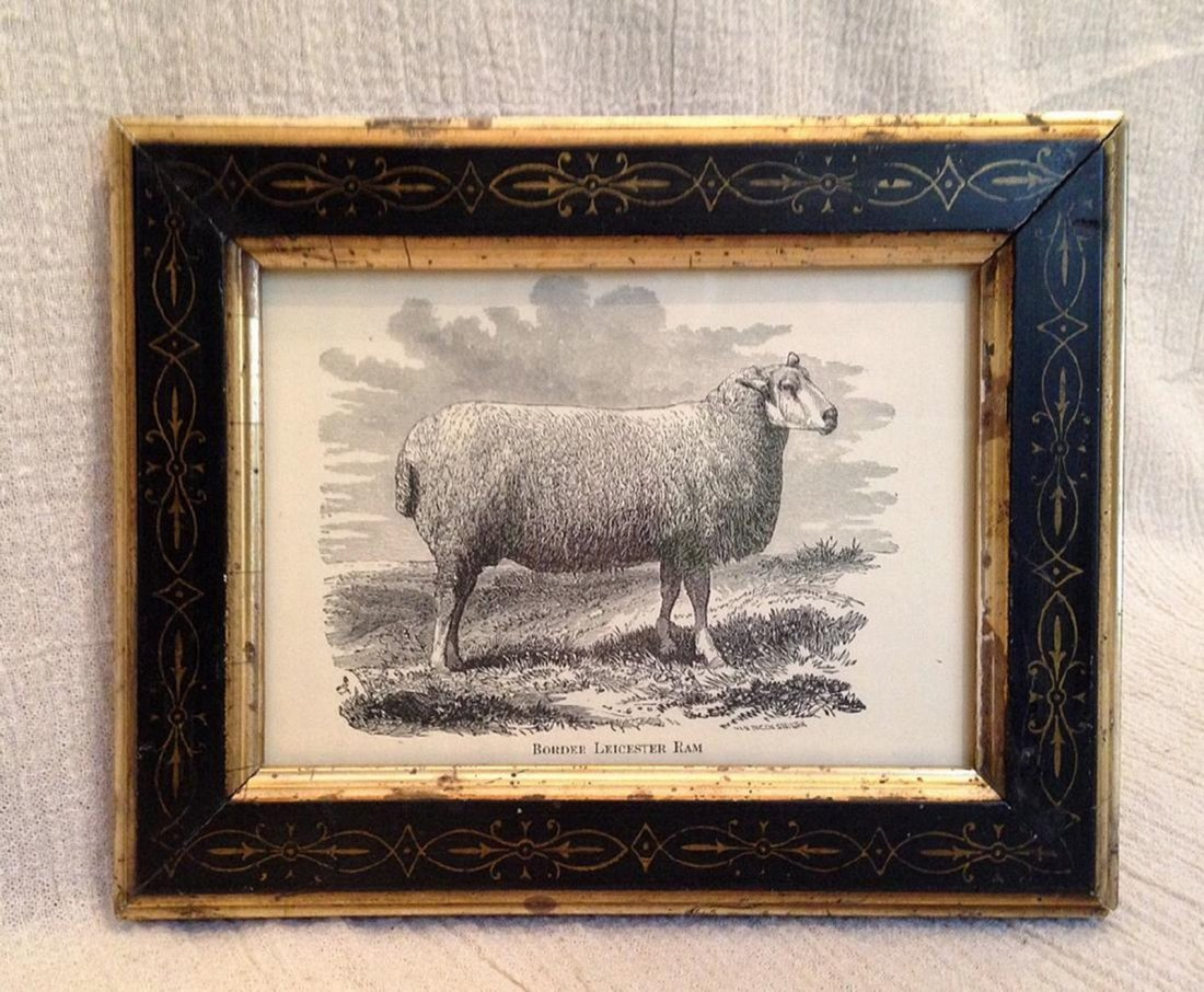 Late 19th Century Sheep Engraving