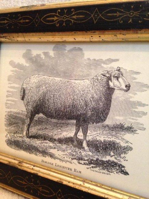 Late 19th Century Sheep Engraving - 2