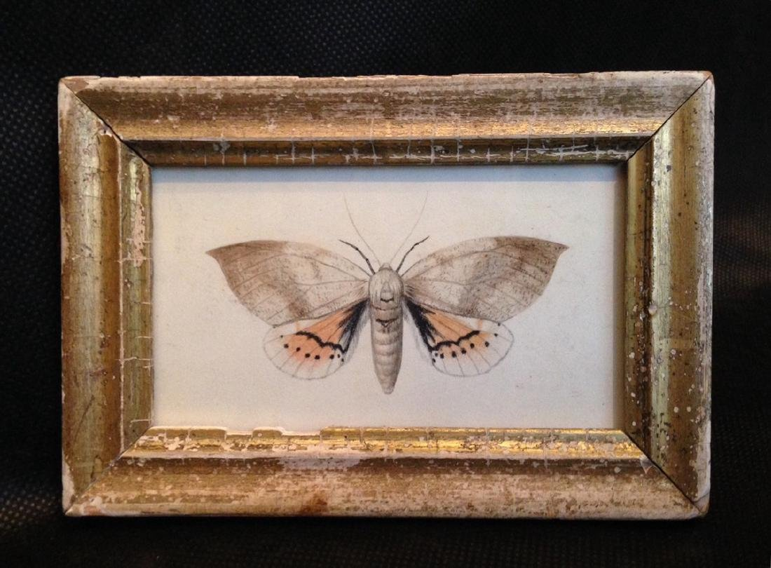 1840 Moth Watercolor Painting