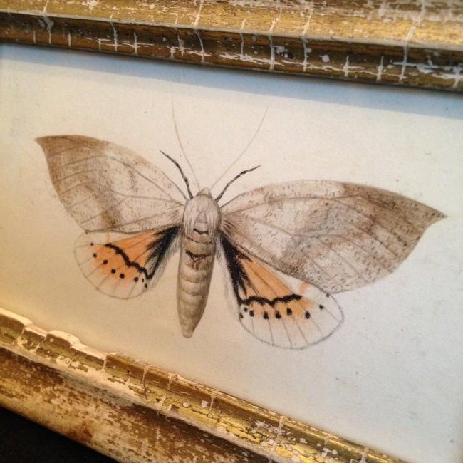 1840 Moth Watercolor Painting - 2